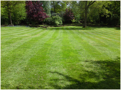 Clives garden services professional gardening services for Large grasses for gardens